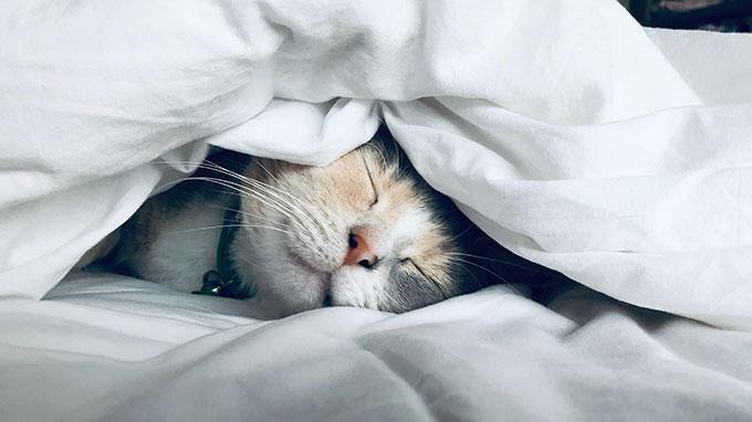 猫にはアロマオイルの精油が危険