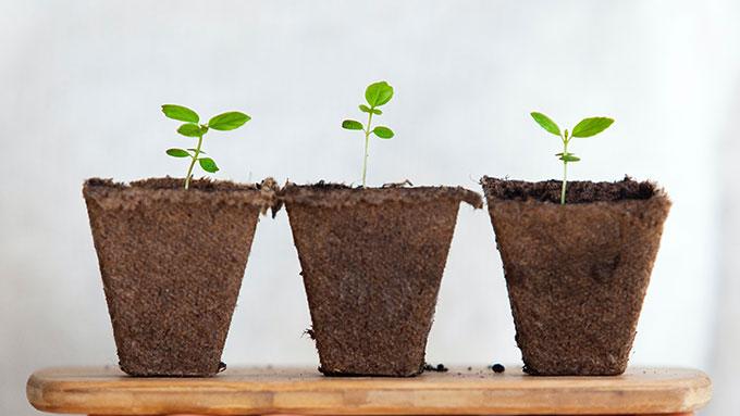 キャンドルの安全な成分は植物由来
